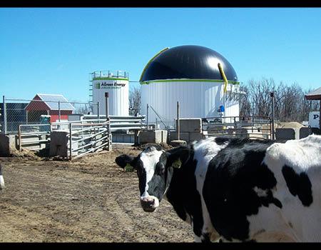 Cow Power at the Jordan Family Dairy Farm, Rutland, MACow Power at the Jordan Family Dairy Farm, Rutland, MA